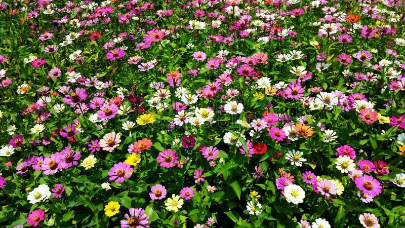 Colourfullbloemen stock fotografie