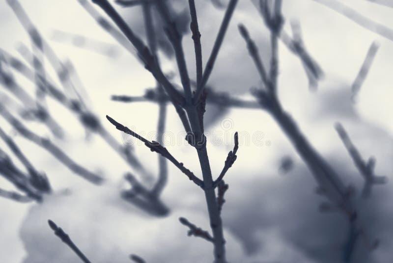 Colourless Macro Of Winter Shrub Free Public Domain Cc0 Image