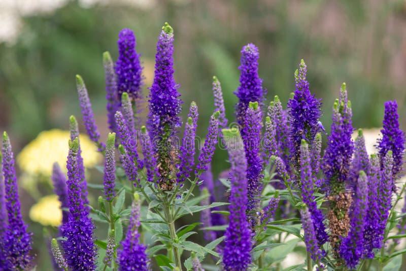 Colours. Summer, flower, flowerpower, garden stock photos