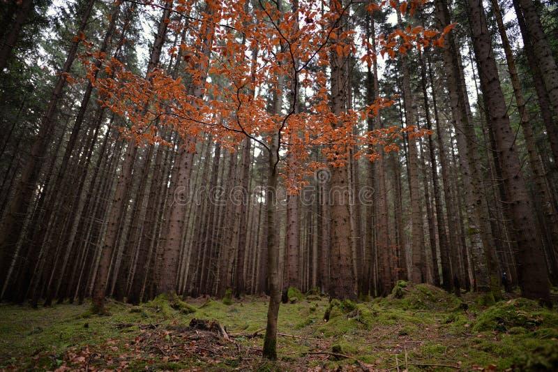 Colours drzewo w jesieni obrazy royalty free