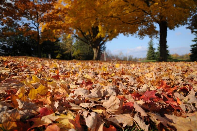 colours spadek fotografia royalty free