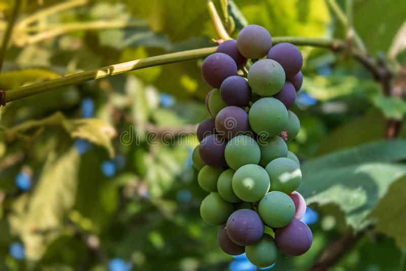 Colours w ogródzie zdjęcie royalty free