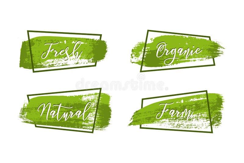 Colpi verdi della spazzola con differenti parole dell'alimento fresco e struttura verde scuro isolate su fondo bianco Disegno di  royalty illustrazione gratis