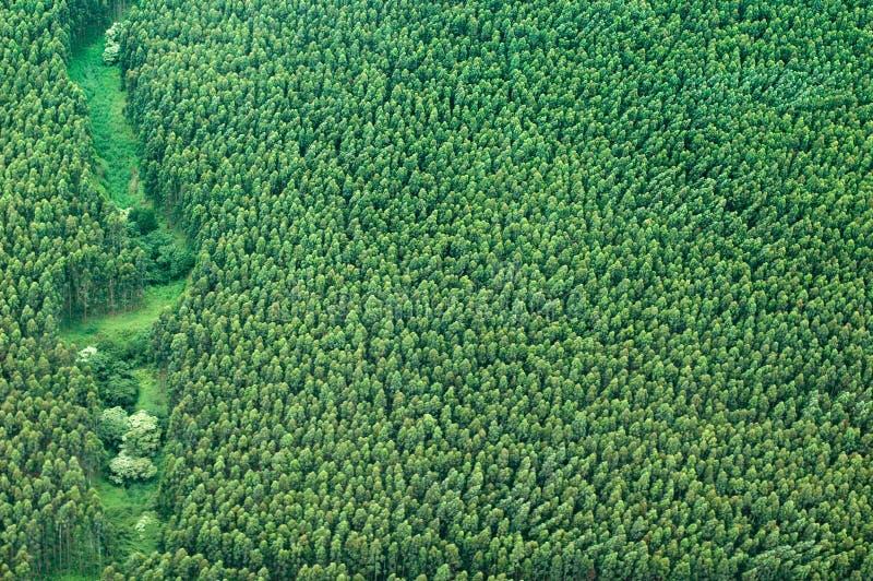 Colpo aereo della grande isola - foresta pluviale dell'eucalyptus fotografie stock