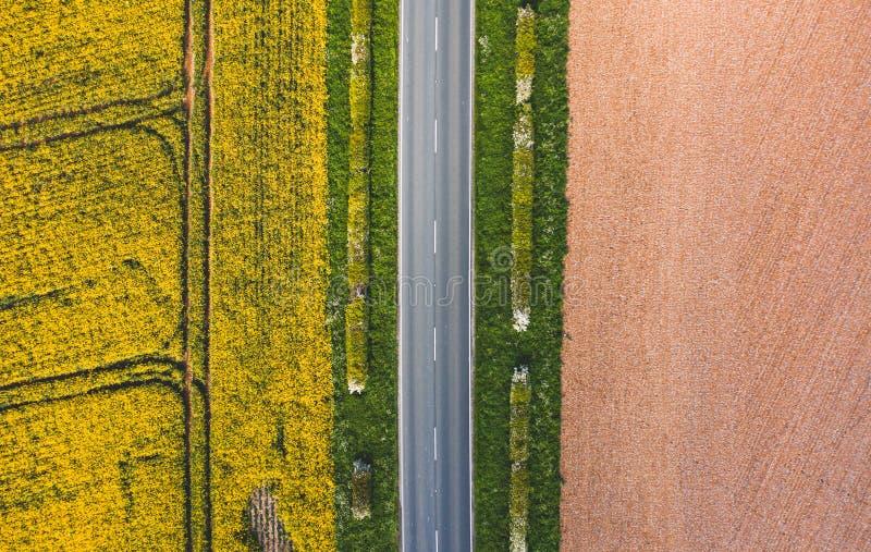 Colpo aereo della strada stretta fra erba verde soleggiata, seme di ravizzone fotografie stock