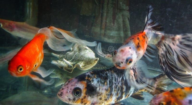 Colpo alto vicino dei pesci in un acquario immagini stock libere da diritti