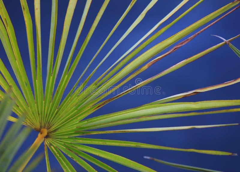 Colpo alto vicino della foglia della palma fotografie stock