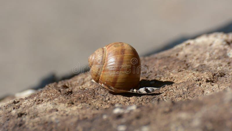 Colpo alto vicino di una lumaca Shell fotografia stock libera da diritti