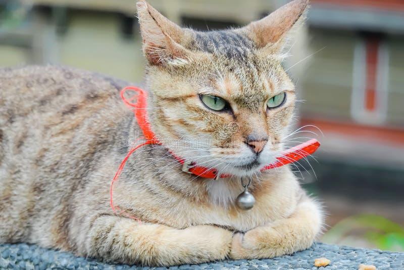 Colpo alto vicino di vecchio gatto marrone che si trova sopra su una parete a Houtong Cat Village in Ruifang fotografie stock libere da diritti