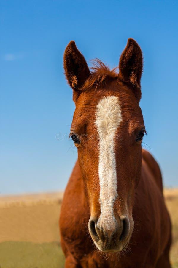 Colpo capo di un cavallo fotografie stock