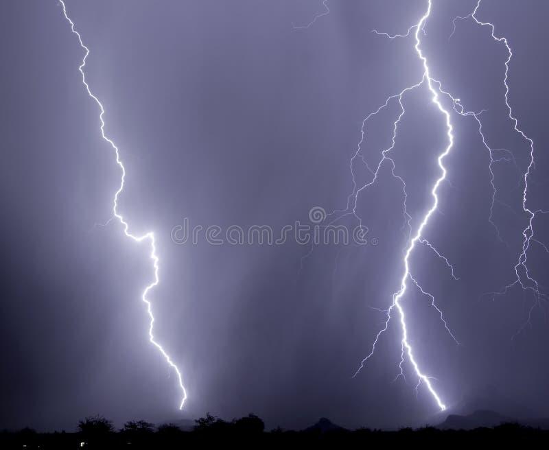 Colpo del Saguaro immagini stock libere da diritti