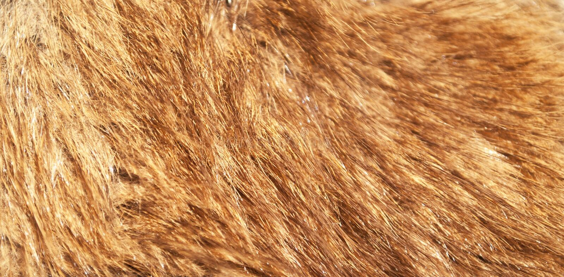 Colpo della pelliccia di volpe rossa macro fotografia stock libera da diritti