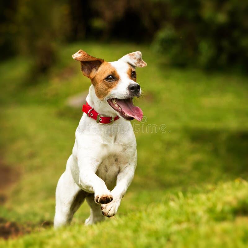 Colpo di azione del cane fotografie stock libere da diritti