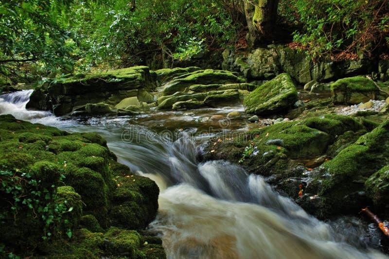Colpo dilettante del fiume scorrente attraverso la foresta fotografie stock