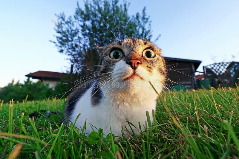 Colpo grandangolare di piccolo gatto sveglio con i grandi occhi immagini stock libere da diritti