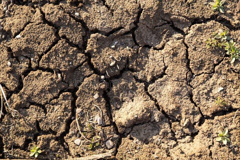 Colpo pieno della pagina della terra sporca Cracked Fondo di terra incrinata e secca fotografia stock libera da diritti