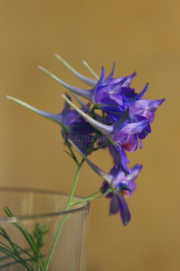 Colpo potato del wildflower blu sopra fondo giallo Bella priorit? bassa della natura fotografie stock libere da diritti