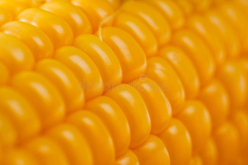 Colpo vegetariano succoso luminoso del cereale sopra fondo bianco immagini stock libere da diritti