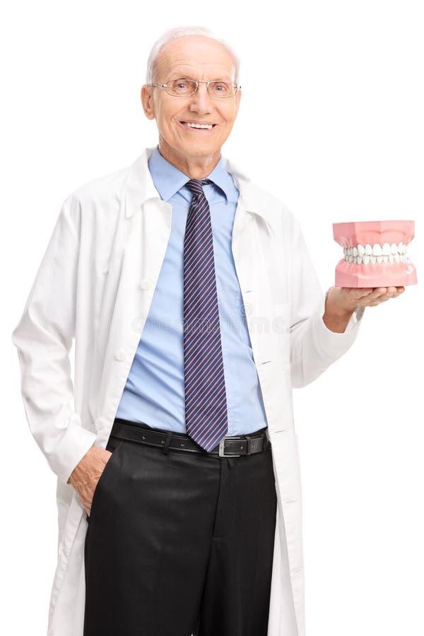 Colpo verticale del dentista maturo che tiene una protesi dentaria fotografia stock