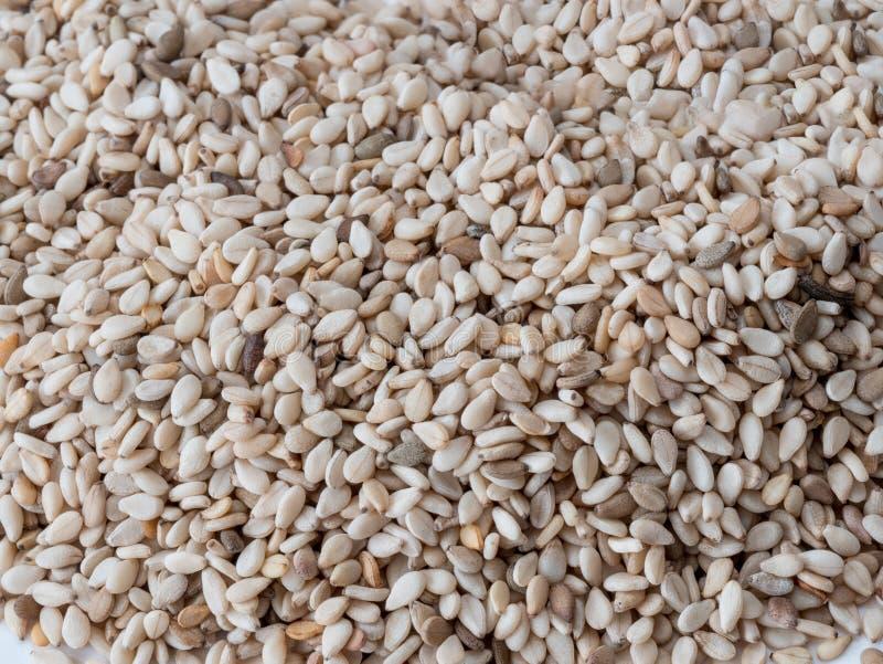 Colpo vicino di un gruppo di semi di sesamo & di x28; Indicum& x29 del Sesamum; fotografie stock