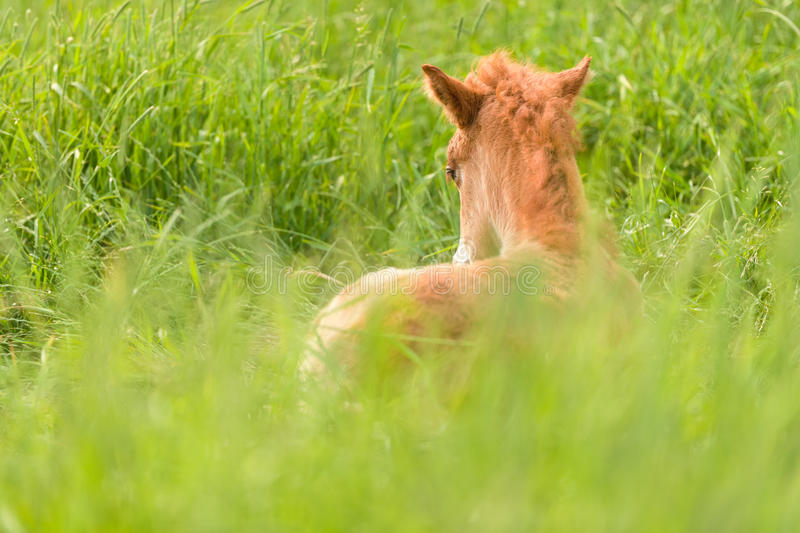Download Colt stock image. Image of natural, outdoors, small, cute - 23601901