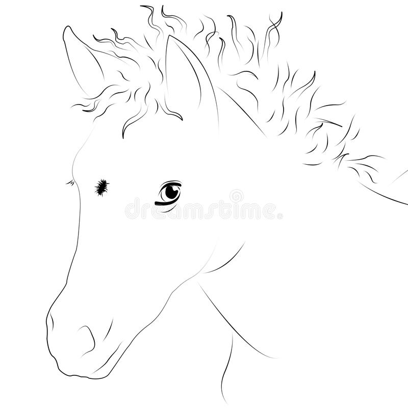 Colt as line drawing royalty free stock image