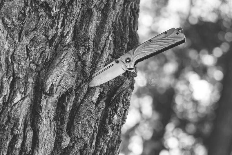 Coltello attaccato nel tronco di albero immagini stock