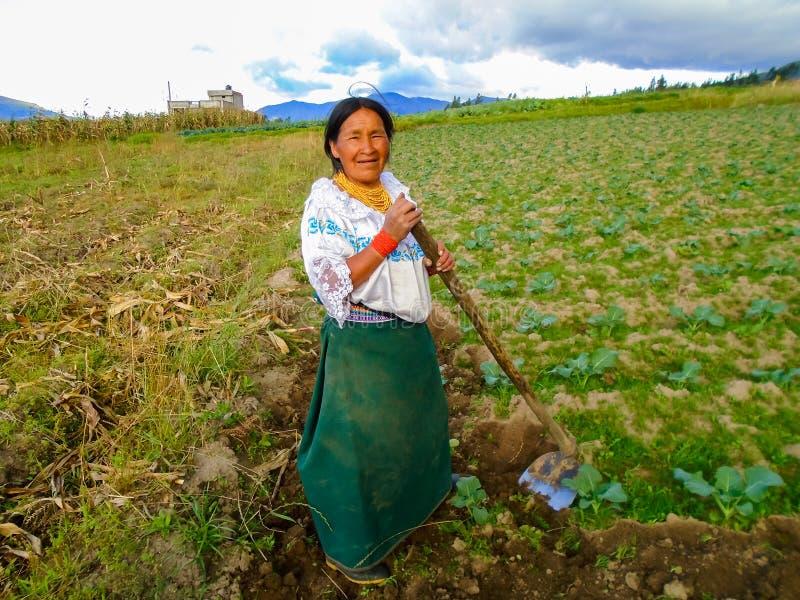 Coltivando in Otavalo, l'Ecuador fotografia stock libera da diritti