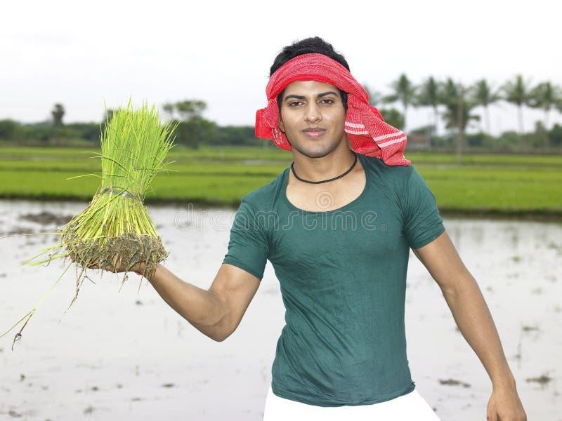 Coltivatore che lavora nel suo campo di risaia fotografia stock