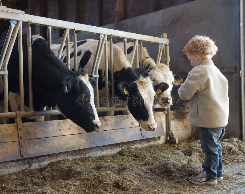 Coltivatore e mucche del bambino fotografia stock libera da diritti