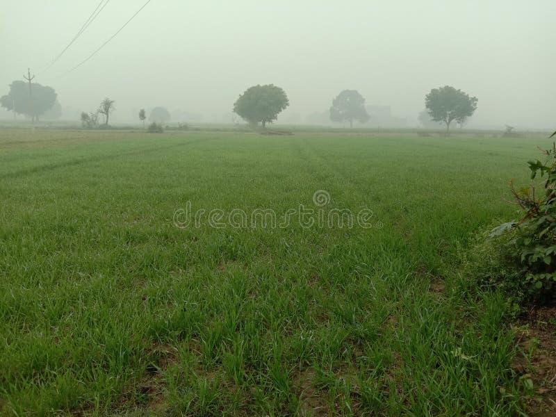 Coltivatore indiano ki Crop ki gaihu il campo fotografie stock