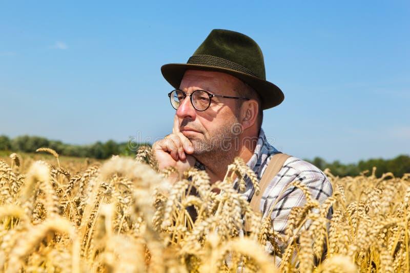 Coltivatore premuroso in un campo di cereale immagini stock