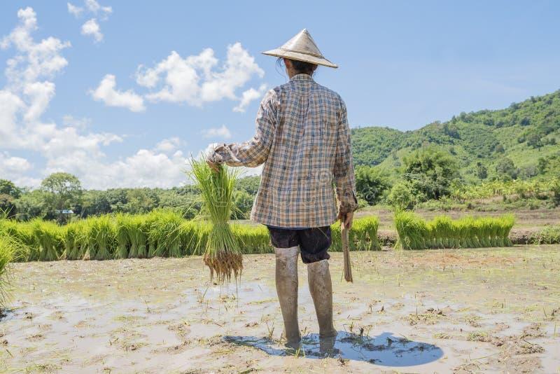 coltivatori fotografie stock