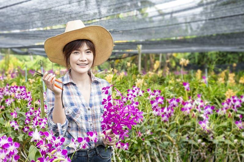 coltivatori asiatici Gli agricoltori femminili felici stanno raccogliendo i fiori dell'orchidea da vendere Bella donna che lavora fotografia stock libera da diritti