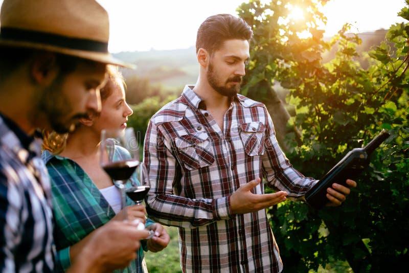 Coltivatori del vino che assaggiano vino in vigna fotografia stock