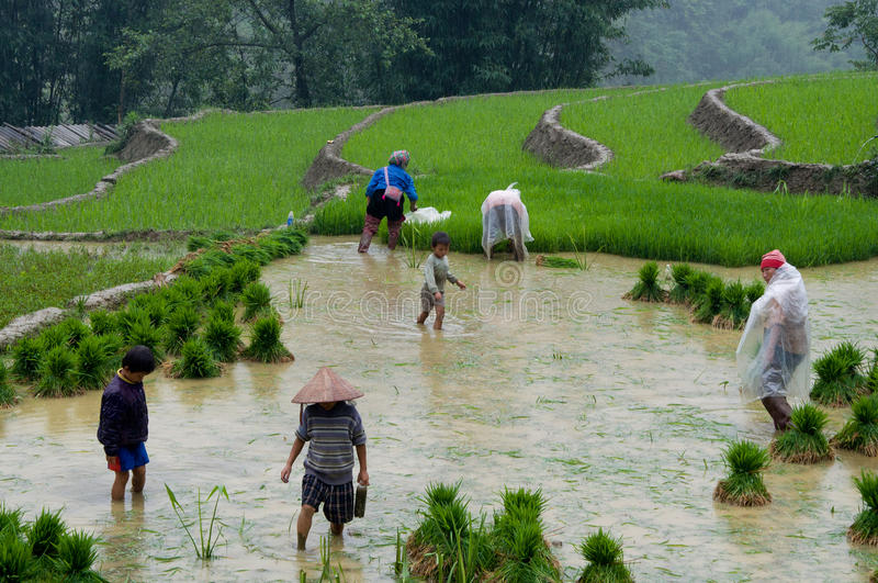 Coltivatori vietnamiti nel giacimento del riso immagini stock libere da diritti