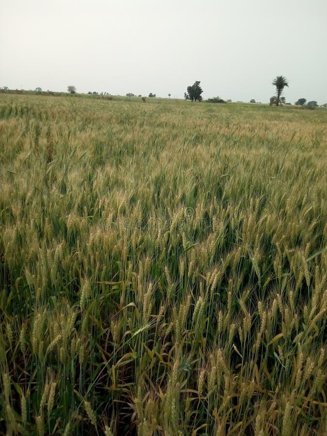 coltivazione immagine stock