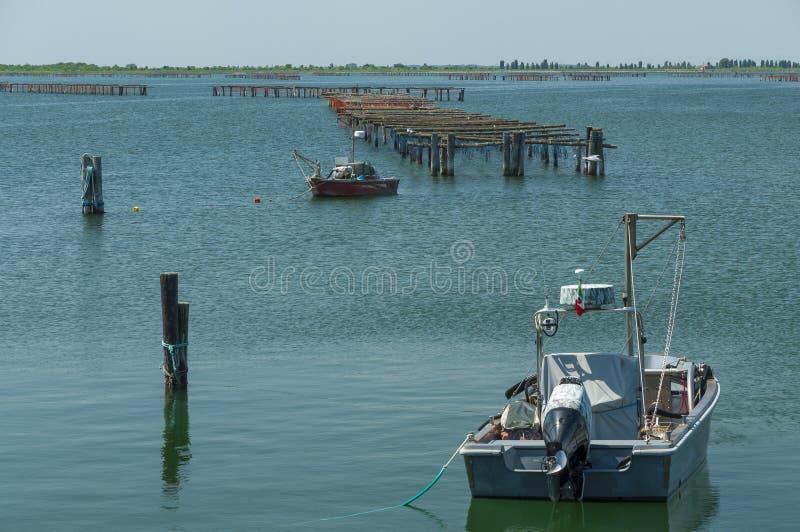 Coltivazione delle cozze, laguna di Scardovari, mare adriatico, Italia immagine stock