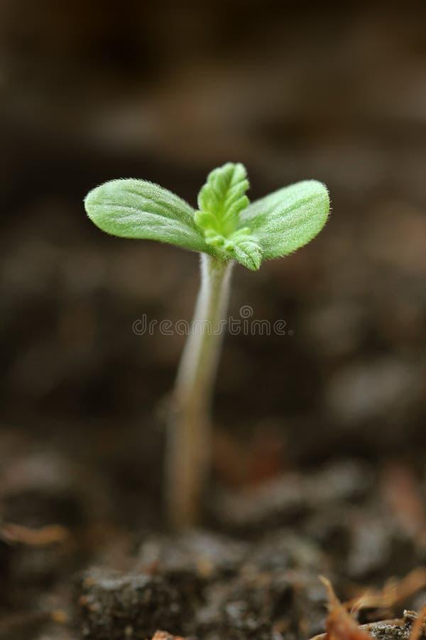 Coltivazione di giovani piante in giardino fotografia stock libera da diritti