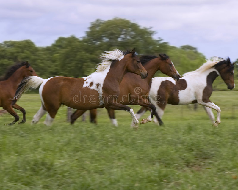 Colts running stock photo