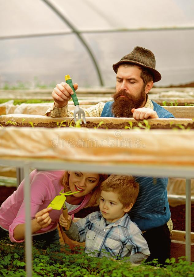 coltura Coltivazione agricola coltivazione sull'azienda agricola familiare Coltivazione della serra Godere del loro lavoro fotografia stock