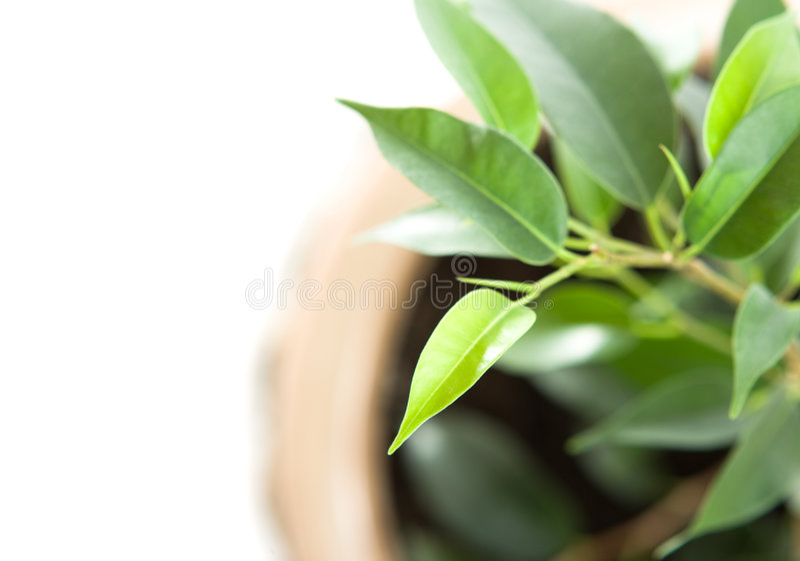 Coltura di una pianta giovane fotografie stock libere da diritti