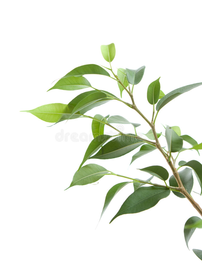 Coltura di una pianta giovane immagine stock