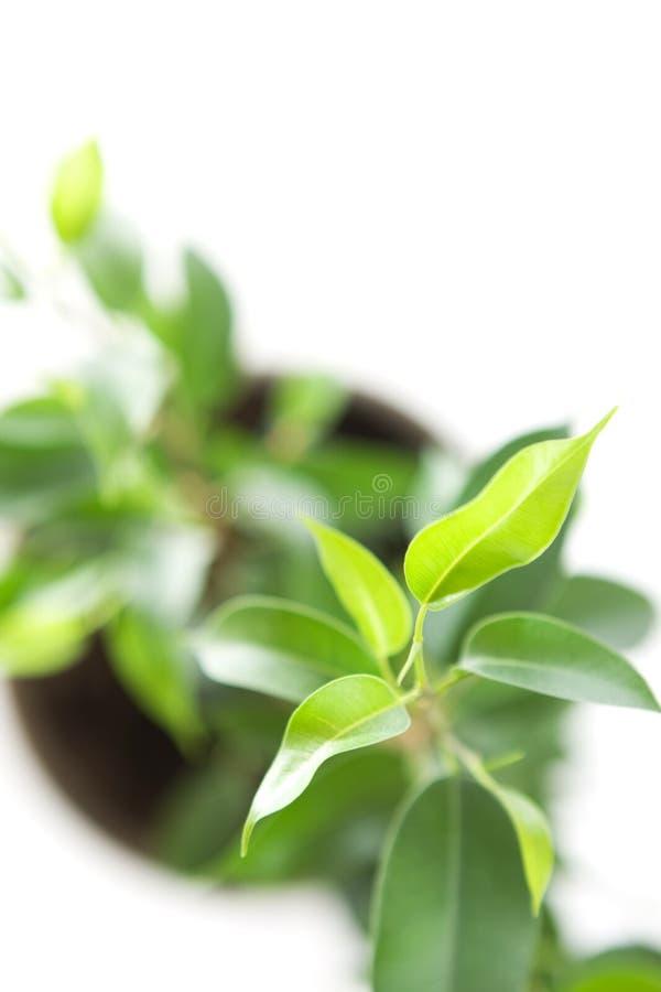 Coltura di una pianta giovane immagini stock