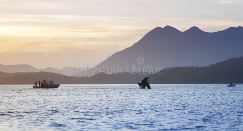 Columbia Britannica selvaggia di Tofino delle montagne di tramonto della frattura dell'orca fotografie stock