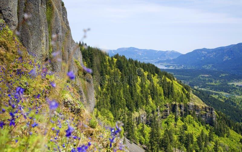 columbia kwiatów ramy wąwozu purpury fotografia royalty free