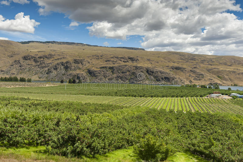 Columbia River Apple Orchards. The Columbia river provides irrigation for hundreds of apple orchards all across the Okanogan area of eastern Washington state royalty free stock photo