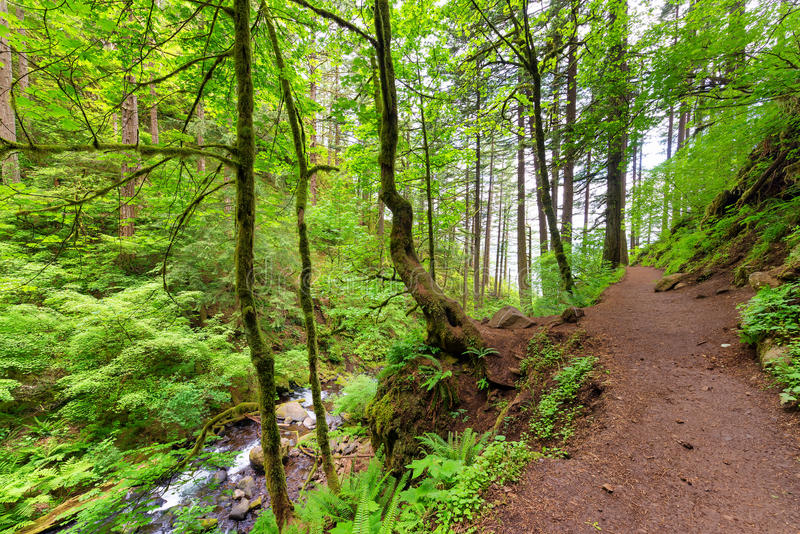 Columbia River Gorge Trail. Trail to Horsetail Falls in the Columbia River Gorge near Portland, Oregon royalty free stock images
