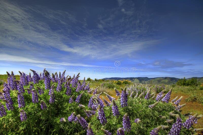 columbia wąwozu rzeki wildflowers zdjęcia royalty free