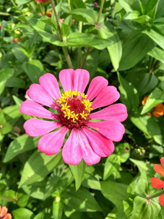 Columbiaanse bloem royalty-vrije stock fotografie